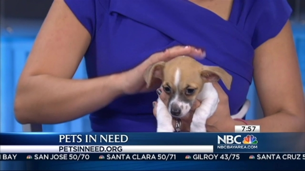 Pets in Need: Alex and Zelda