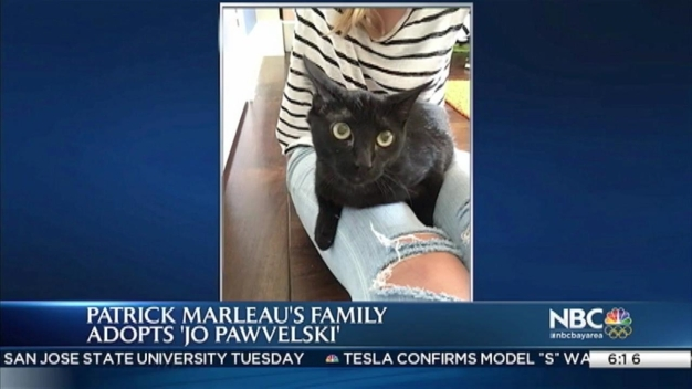 Jo Paw-Velski Cat Adopted by Sharks' Player Patrick Marleau