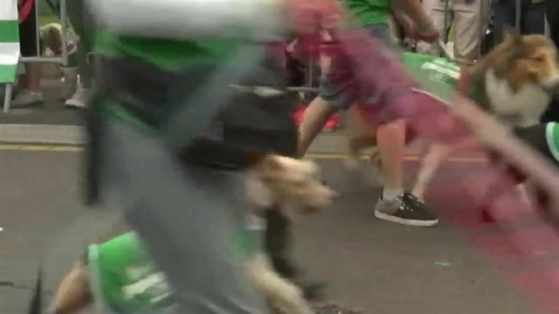 """Dogathon"" in Peru, Winners Get Free Dog Food"
