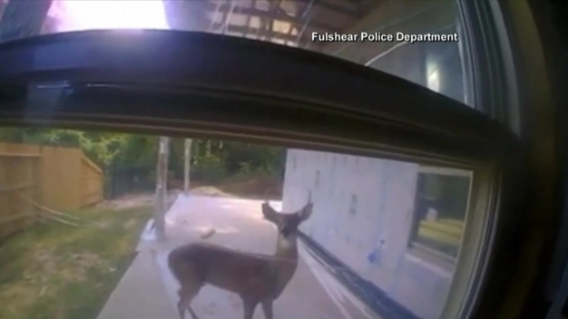 Texas Cop Saves Deer
