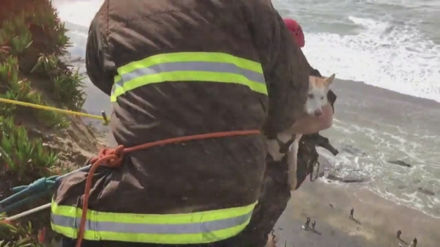 San Francisco Firefighters Pull Dog to Safety After it Plunges Off Fort Funston Cliff