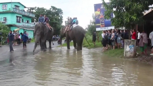 Elephants Rescue Stranded Tourists in Asia