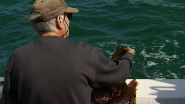 Kelp Shortage Along Pacific Coast