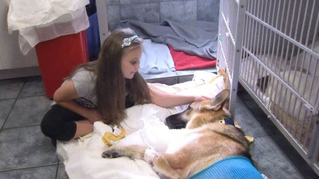Dog Bitten by Rattlesnake While Protecting 7-Year-Old