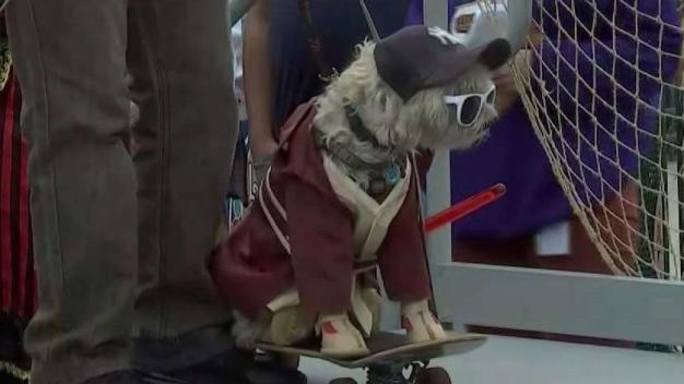 Trick or Dog Treat? Costumed Canines Ready for Halloween
