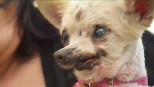 Ugliest Dog Contest Held in Petaluma