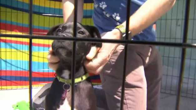 Clear the Shelters: Bay Area Animals Look for Forever Homes