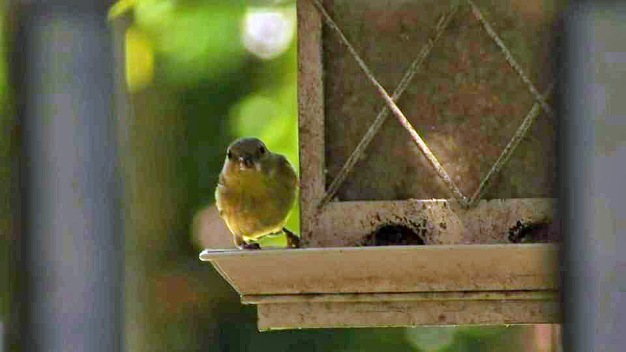 Deadly Bacteria Affecting Birds in Contra Costa County