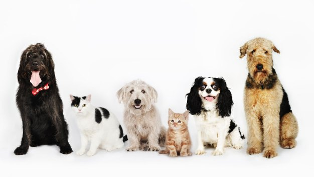 Clear the Shelters: Find a Shelter Near You
