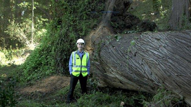 Fallen Presidio Tree to Live on in New Park