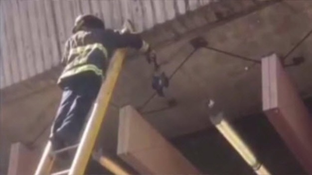 Oakland Firefighters Free Pigeon from BART Wires