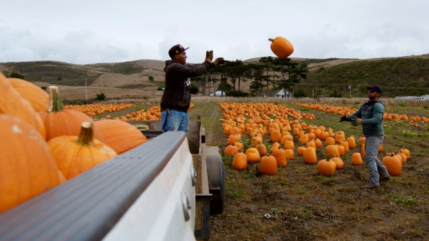 360 Gallery: Pumpkin Patches Bring Crowds to Half Moon Bay