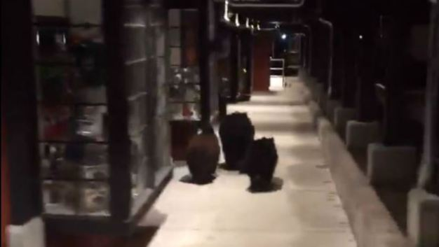 Three Bears Spotted at Lake Tahoe Shopping Center