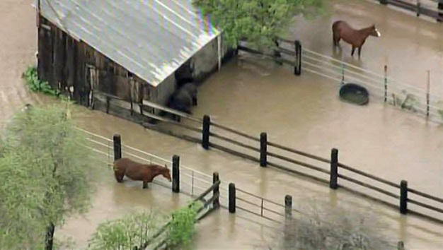 Crews Working to Rescue Horses Stranded in SJ Floodwaters