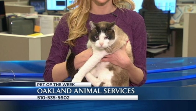 Bay Area Proud Pets: Avon