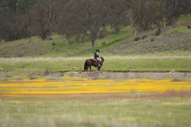 A Fairy Tale in Yellow: Wildflowers Take Over San Antonio Valley