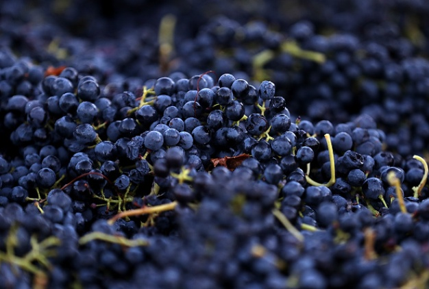 Wine Country Harvests Continue After Deadly Wildfires