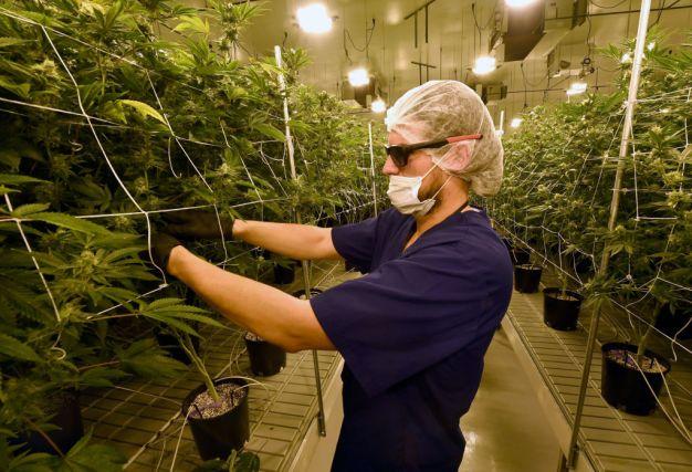 California Made $60.9M in Cannabis Tax Revenue