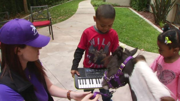 Mini Therapy Horses Lift Spirits of Critically Ill Children