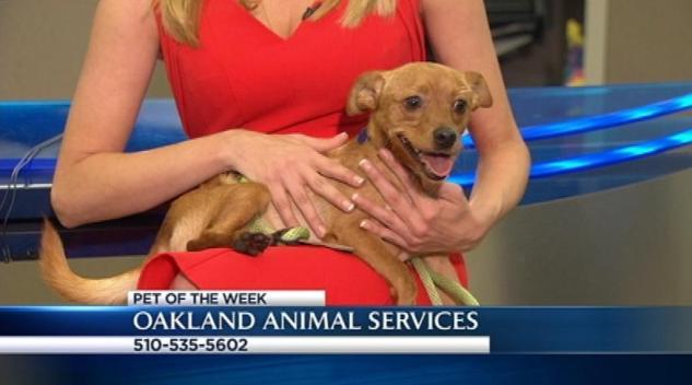 Bay Area Proud Pets: Sherbert