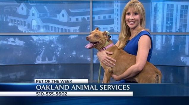 Bay Area Proud Pets: Triscuit