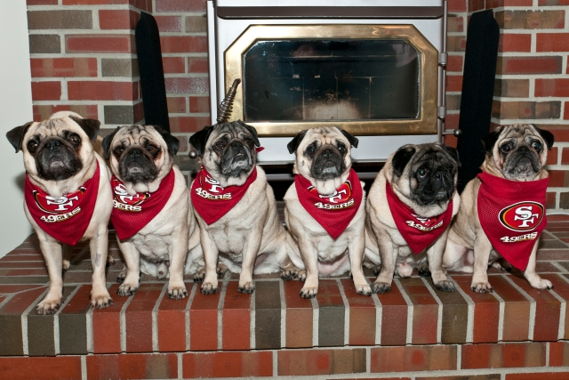 Pets Decked Out in 49er Gear