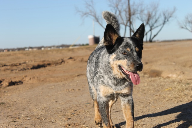 Why You Should Adopt a Shelter Animal | Clear the Shelters