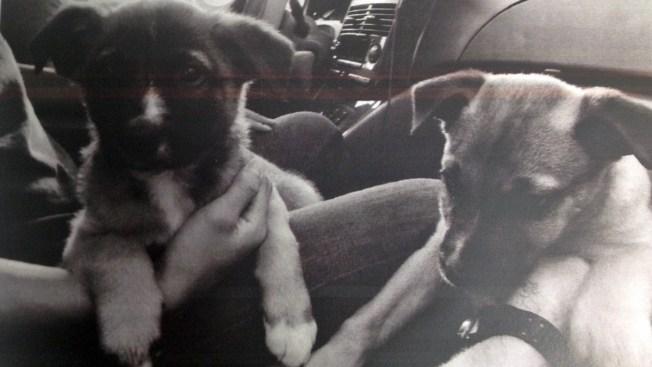 San Leandro Police: Puppies Stolen, Put For Sale on Craigslist