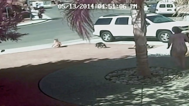Family Cat Saves Boy From Dog Attack