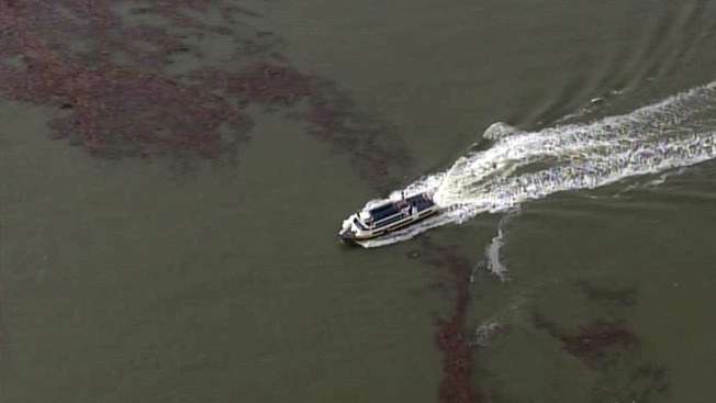 Storm Debris Litters San Francisco Bay, Prompts Headache for Boaters