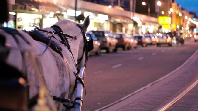 PETA Demands Horse-Drawn Carriage Ban