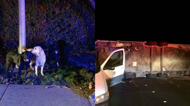 Labrador Retrievers Rescued After Rollover Crash in Alameda County