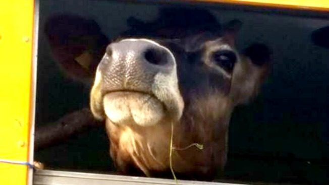 Mobile Petting Zoo in the North Bay Sparks Violent Scuffle