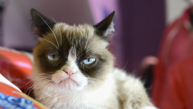Grumpy Cat to Visit San Francisco