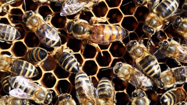 Pesticides Might Be Responsible for California Bee Deaths