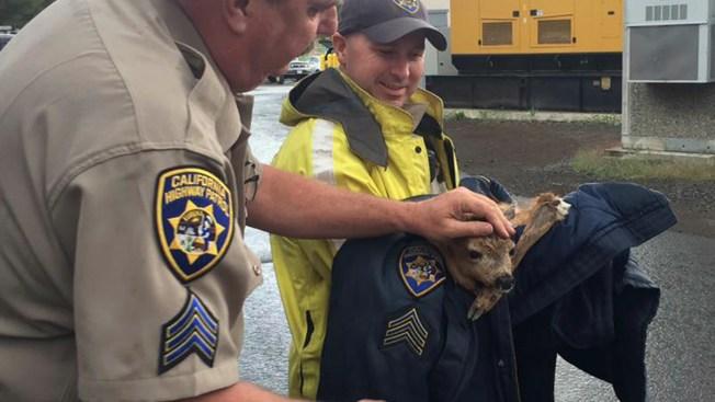 CHP Officer Rescues Baby Deer Stuck in Freeway Drain Near Truckee