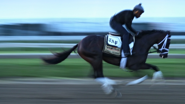 Always Dreaming Ready to Roll, Multiplier Gallops