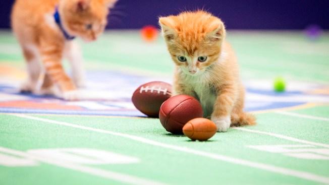 Teeny, Tiny Kitten Olympians Are as Good as Gold