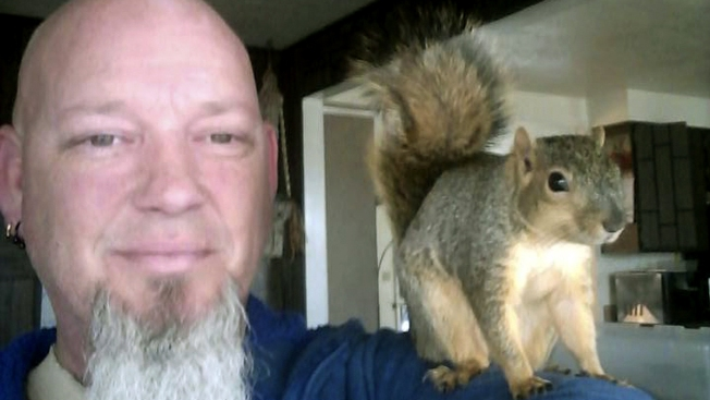 Pet Squirrel That Foiled Idaho Home Burglary Rides Off Into the Sunset
