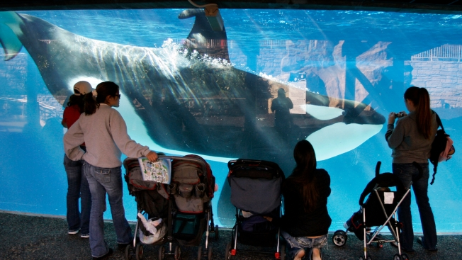 SeaWorld Settles Orca Trainer Safety Citations
