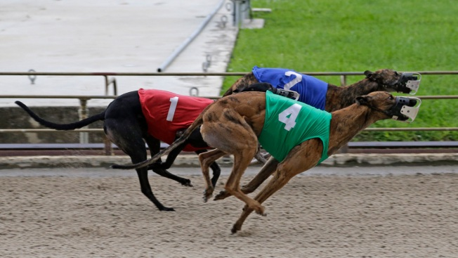 Florida Racing Greyhounds Test Positive for Cocaine: State