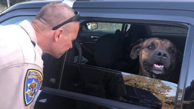 Northern California Officer Rescues Dog Kicked Out of Car