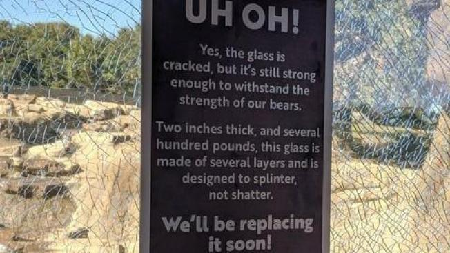 Child With Rock Cracks Glass Viewing Window At Oakland Zoo