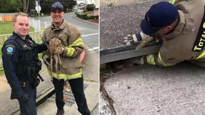 Baby Deer Rescued From Storm Drain in Pacifica