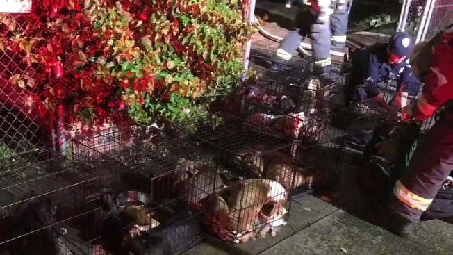 Several Dogs Rescued from Oakland House Fire