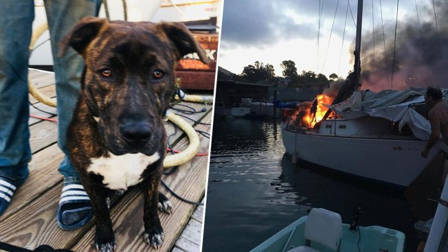 To the Rescue! Officer Saves Dog From Burning Boat in San Rafael
