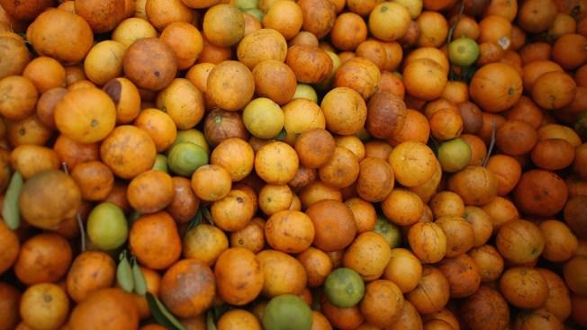 Disease, Irma Has Left Florida Citrus Industry Reeling