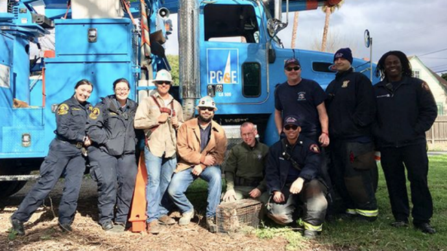 To the Rescue! Crews Free Hawk Ensnared in East Bay Tree
