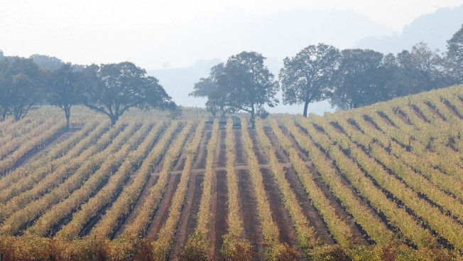 Despite Fires, California Wine Is Doing Just Fine — for Now