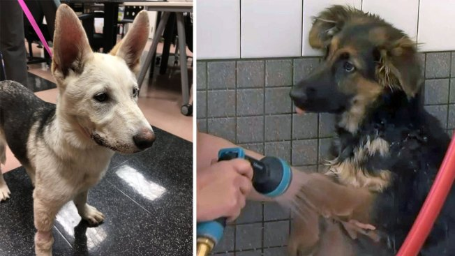 Reward Increase to $40K for Capture of Oakland Puppy Mutilation Suspect